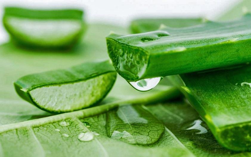 Aloe Vera binlerce yıl önceki keşfinden bu yana doğal bir iyileştirici olarak kabul edilmektedir. Ancak asıl kullanım alanı kozmetik ve ilaç endüstrileri olmuştur